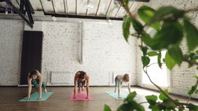 Slim young women are doing sequence of yoga asanas in nice modern studio. White walls, green plants, bright mats, large. Slim young women are doing sequence of stock video