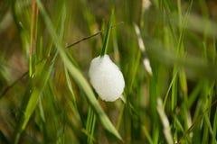 Slime σαλιγκαριών Στοκ φωτογραφίες με δικαίωμα ελεύθερης χρήσης