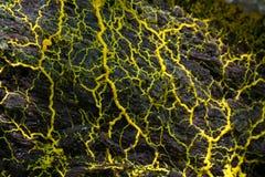 Slime φόρμα στοκ εικόνες