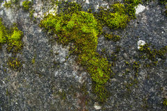 Slime algae. On the wall stock image
