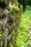 Slime algae wall. Along the way royalty free stock photos