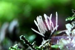 Slime mold fungi cosmic objects strange stock image