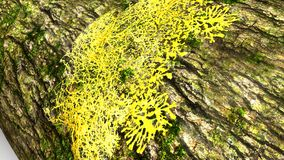 Slime molds Royalty Free Stock Photos