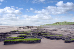 Slimey green mud banks at Beal beach Royalty Free Stock Image