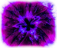 Slimey kwiat 3 Zdjęcie Royalty Free