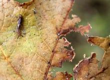 Slimey slug on leaf Stock Photos