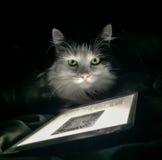 Slimme kat Stock Afbeeldingen