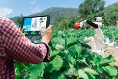 Slimme robotachtige landbouwersaardbei in automatisering van de landbouw de futuristische robot aan het werk royalty-vrije stock foto