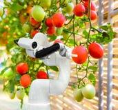 Slimme robotachtige landbouwersoogst in automatisering van de landbouw de futuristische robot om technologie te werken stock afbeelding
