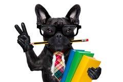 Slimme schoolhond stock foto