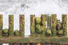 Slimy πράσινα άλγη που καλύπτουν τους βράχους σε μια σκουριασμένη παραλία groyne Στοκ Εικόνες