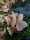 Slimy Brown Mushroom. Detail of slimy Mushroom from UK forests Stock Photo
