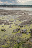 Slimy Tide Pools Stock Images