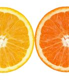 slince pomarańczowy slince obraz royalty free