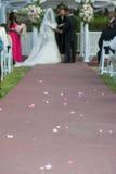 Slinga av rosa kronblad royaltyfri bild