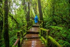 Slinga för Ang-kanatur, Doi Inthanon nationalpark fotografering för bildbyråer