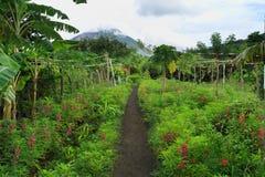 Slinga för Ometepe önatur, Nicaragua Arkivfoto