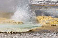 Slinga för springbrunnmålarfärgkruka mellan gayser som kokar gyttjatips och brända träd in i den Yellowstone nationalparken fotografering för bildbyråer