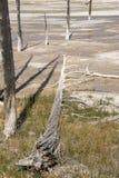 Slinga för springbrunnmålarfärgkruka mellan gayser som kokar gyttjatips och brända träd in i den Yellowstone nationalparken royaltyfri foto