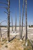 Slinga för springbrunnmålarfärgkruka mellan gayser som kokar gyttjatips och brända träd in i den Yellowstone nationalparken royaltyfri fotografi