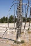 Slinga för springbrunnmålarfärgkruka mellan gayser som kokar gyttjatips och brända träd in i den Yellowstone nationalparken arkivbilder