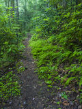 Slinga Greenbrier, Great Smoky Mountains nationalpark, TN royaltyfri fotografi
