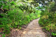 Slinga i Chiapas, Mexico arkivfoto