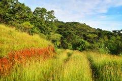 Slinga i Chiapas, Mexico fotografering för bildbyråer