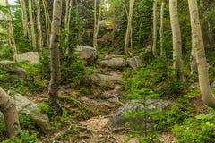 Slinga i en Colorado skog Arkivbilder