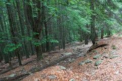 Slinga i en skog Royaltyfri Fotografi