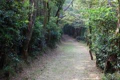 Slinga i skogen Royaltyfria Bilder
