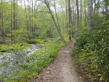 Slinga i skogen eller tr?n med en str?m eller en flod royaltyfria bilder