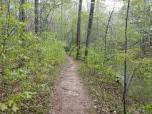 Slinga i skogen eller tr?n med en str?m eller en flod royaltyfri fotografi