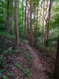 Slinga i skogen, runt om teveronikasmedja sjön royaltyfria bilder
