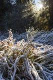 Slinga med djupfryst gräs till och med höstskogen Fotografering för Bildbyråer