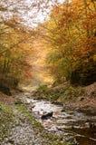 Slinga med floden till och med höstskogen Arkivbild