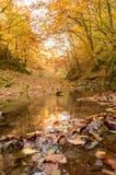 Slinga med floden till och med höstskogen Fotografering för Bildbyråer