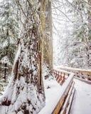 Slinga till och med den forntida skogen Arkivfoto