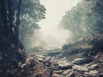 Slinga till och med en mystisk skog fotografering för bildbyråer