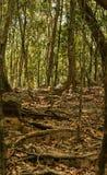 Slinga till och med grön skog Arkivfoton