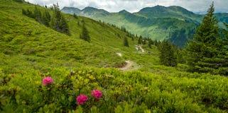 Slinga till och med härligt frodigt alpint landskap royaltyfria foton