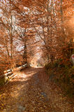 Slinga till och med höstskogen Royaltyfria Bilder