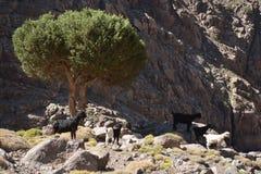 Slinga till toubkal från Marrakech i Marocko Norr Afrika Fotografering för Bildbyråer