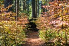 Slinga uppställd med färgrika skogskornellbuskar Royaltyfria Bilder