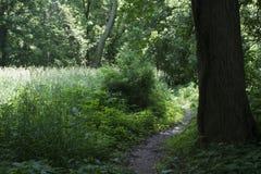 Slinga vid högväxt gräs royaltyfri foto