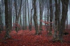 Slingaho en höstskog med dimma Arkivbilder