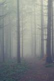 Slingan är borttappad i dimman bland granträden Royaltyfri Fotografi
