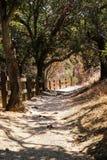 Slingan i alun vaggar parkerar, San Jose, Kalifornien royaltyfria bilder