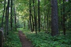 Slingan i skogen arkivbild