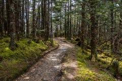 Slingan passerar till och med mossig skog royaltyfri foto